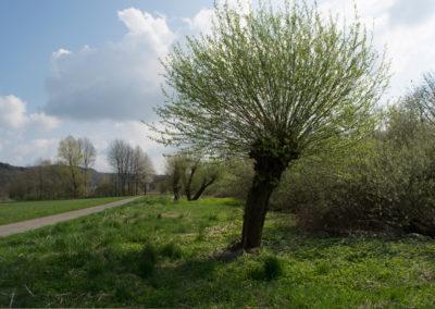 Galerei-Rhein_Weide