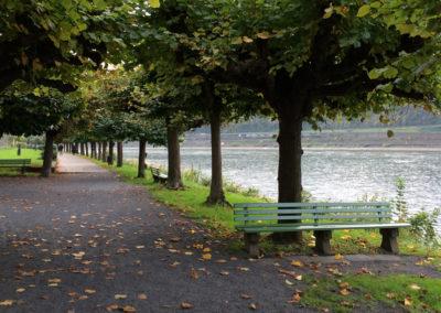 Ausflüge | Herbst am Rhein